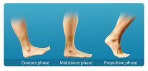 Phases Of Heel Striking