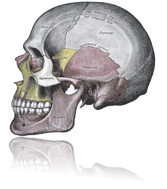 The Five Components of the Primary Respiratory Mechanism (Cranial Concept)