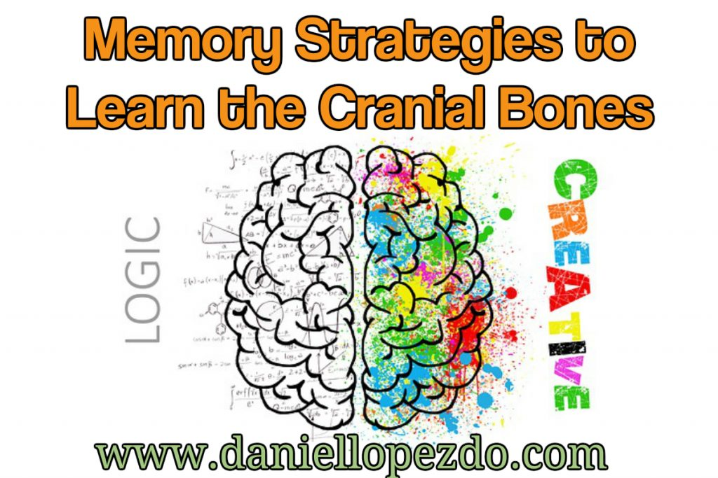 cranial anatomy memory strategies Archives - Daniel Lopez, D.O.