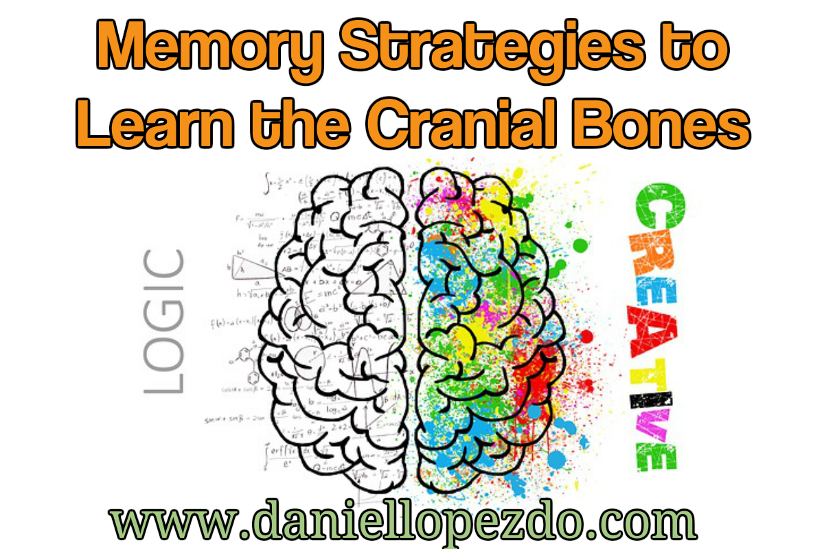 Memory Trick to Learn the Cranial Bones